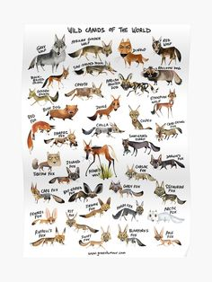"""""""Wild Canids of the World"""" Poster by rohanchak Wild Animal World, Animals Of The World, Dogs Of The World, Animals And Pets, Cute Animals, Tiger Species, Wild Animals Photos, History Posters, Animal Tracks"""