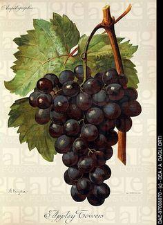Grape Tree, Grape Vines, Fruit Painting, Ceramic Painting, Chandelier Wedding Decor, Black And White Flower Tattoo, Sunflower Template, Wine Craft, Still Life Fruit