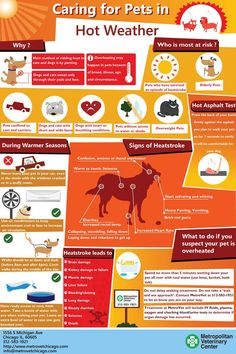 Hot Weather Tips For Your Pet - An Infographic from Chicago Veterinary Hospital…