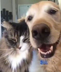 GIF Selfie with my pussy