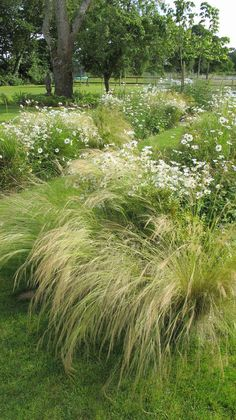 37 Shabby Chic Grass Garden design ideas for designing your garden - Modern Prairie Garden, Meadow Garden, Garden Cottage, Dream Garden, Garden Grass, Prairie Planting, Farmhouse Garden, Garden Paths, Garden Landscaping
