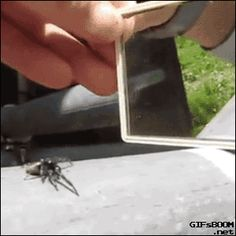 Spider reacting to what it thinks is another spider.