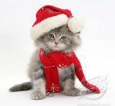 Merry Christmas everybody!!!!! ❤❤❤❤❤