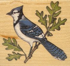 Blue Jay A2542E Bird Rubber Stampede Wood Mounted Rubber Stamp
