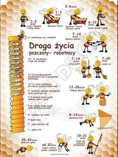 Honey Packaging, School Clubs, Honey Recipes, Bee Keeping, Montessori, Homeschool, Education, Health, Crafts
