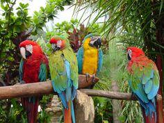 Tips Lengkap Memelihara Burung Beo Bagi Pemula – Fauna. Parrot Image, Parrot Perch, Blue Macaw, Macao, Free Online Jigsaw Puzzles, Colorful Parrots, Bird Watching, Nature Photos, Animals And Pets