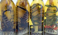 Snakes alive, the venomous vino that comes with added bite