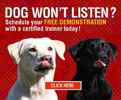 Need my dog to be my partner, not a pain.  Dog Training in Milwaukee, WI   Dog Trainer - Jason Loomis   Sit Means Sit