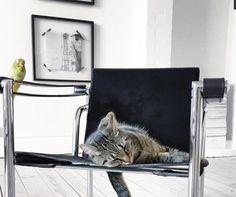 Se nos ha colado un gato !!!.  Foto Annika von Holdt Decoración#Valencia#Interiorismo#Mobiliario#