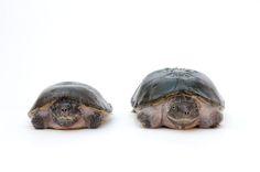 ナショジオ写真家による「絶滅危惧種写真集」に息をのむ : ひろぶろ