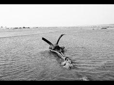 An anchor holding to the sands of Gorai Beach, South Mumbai.