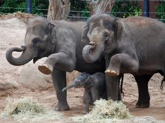 """https://flic.kr/p/8B7REp 