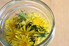DIY Dandelion Salve recipe - put these common weeds to good use! And this link gives you the WHOLE recipie & how to all in one. Healing Herbs, Medicinal Herbs, Natural Healing, Herbal Remedies, Home Remedies, Natural Remedies, Natural Medicine, Herbal Medicine, Salve Recipes