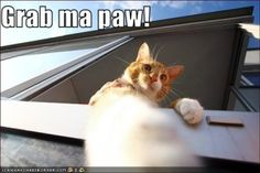 funny animals with captions photo:  funny-pictures-cat-says-to-grab-his.jpg