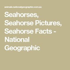 Seahorses, Seahorse Pictures, Seahorse Facts - National Geographic