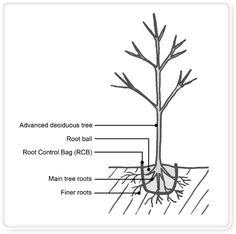 Urban Tree Growers - Method