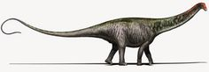 A new analysis of long-necked dinosaurs suggests that the Brontosaurus name was wrongly retired 100 years ago. It's a proposal that excites some paleontologists and leaves others skeptical.
