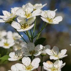 Frühling 2019 #frühling #spring #blumen #flowers #blauerhimmel #bluesky #beauty #nature Gerhard, Instagram, Plants, Beauty, Flowers, Plant, Beauty Illustration, Planets
