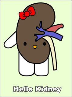 Hello Kit...Kidney?