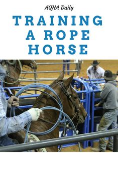 If you are interested in training your horse for the roping pen, read these tips!