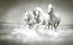 Drie witte paarden