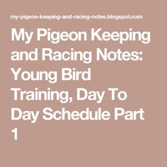 My Pigeon Keeping and Racing Notes: Young Bird Training, Day To Day Schedule Part 1