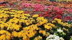 Flores, flores, flores, .....