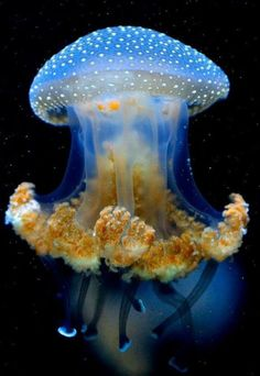 What Do Jellyfish Eat? Jelly fish are beautiful creatures. There is of water in their bodies but still they flow along with the flow of water. These creatures eat meat and mate constantly. Beautiful Sea Creatures, Deep Sea Creatures, Animals Beautiful, Deep Sea Animals, Wild Animals, Creatures 3, Baby Animals, Water Animals, Funny Animals