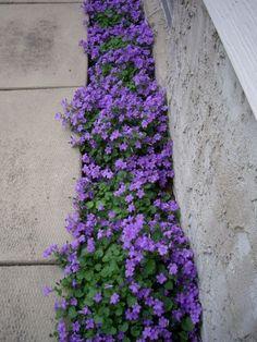 Phenomenon 50+ Beautiful Long Driveway Landscaping Design Ideas https://decoor.net/50-beautiful-long-driveway-landscaping-design-ideas-7713/