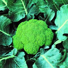 Broccoli, Planting Flowers, Stuffed Mushrooms, Gardening, Vegetables, Plants, Lawn And Garden, Stuff Mushrooms, Vegetable Recipes