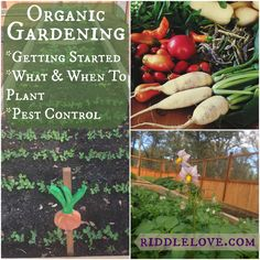 riddlelove: Organic Gardening: Getting Started, Choosing What to Grow When, & Pest Control
