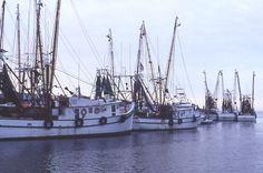 shrimp boats on Shem Creek, Charleston S.C.
