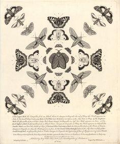 cocoroachchanel:    twelve new designs of british butterflies, 1742, henry roberts