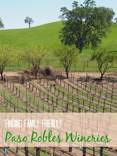 Visiting wineries can be a family activity. We set off to find family-friendly wineries in the up and coming wine region of Paso Robles, California. Here are three we found and what we liked about each.