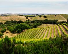 Central Coast Vineyards, Wine Country, Paso Robles California