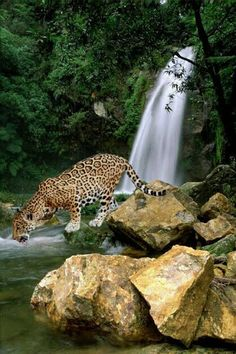 Dear friends this is beautiful waterfall is locate in Mexico state of Puebla. In Xochiapulco, 139 km of #Puebla is La Gloria, a waterfall of about 30 m in height.