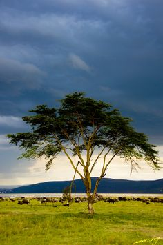 lake nakuru... picture by Umang Jeshani