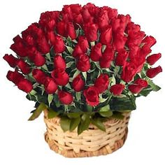 Send Red Roses and Red Roses Bouquets to your loved one in India. To book, remind of sendflowerstoindia.in as Same day delivery specialist. Call us now @ + 9594863100