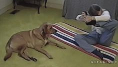 """Hund: """"Guck' einfach zu mir!"""""""