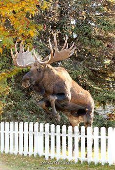 only in Alaska!