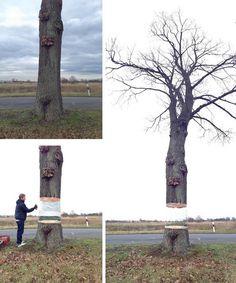 De illusie van een zwevende boom. Daniel Siering en art director Mario Schuster maakte deze optische illusie. Ze bedekten de stam van een boom met folie om daar een meesterlijke weerspiegeling van de achterliggende omgeving op te verven. Zo lijkt het net alsof de boom zweeft!