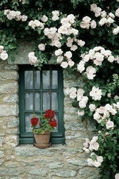 Window@flor