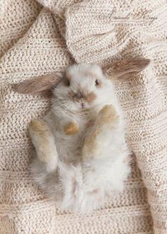 Even bunnies enjoy a nice sweater