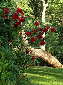Brambly: The Garden