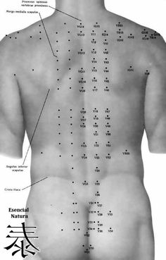 Colección de doce puntos de acupuntura importantes llamados los Shu traseros, o los puntos traseros del transporte. Se localizan en el meridiano de la vejiga a lo largo de la espina dorsal. Hay un punto de transporte posterior para cada uno de los seis órganos yin y cada uno de los seis órganos yang. Se…