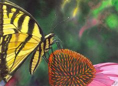 Butterfly Print featuring the painting Cone Flower by Catherine G McElroy