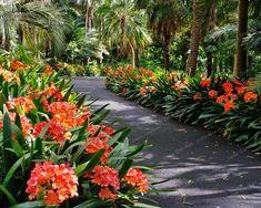 New landscaping shrubs shade plants Ideas Landscaping Shrubs, Florida Landscaping, Garden Shrubs, Tropical Landscaping, Shade Garden, Garden Plants, Flowering Plants, Fence Plants, Landscaping Software
