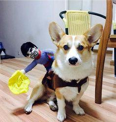 Funny Cowboy Dog Costumes – homelulus