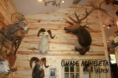 Aspen makes a beautiful interior finish for walls, ceilings, cabinets, or other projects. The color variation in the wood adds character, as you can tell from this trophy room! #aspen #rustic #lumber #trophy #trophyroom #rusticlumber