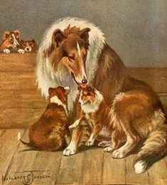 Collie with her pups. Not equine, but I love collies and horses together.